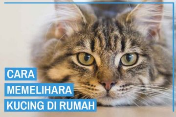 cara memelihara kucing di rumah