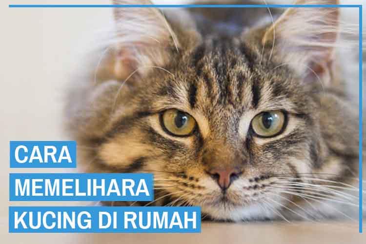9 Cara Memelihara Kucing di Rumah Dengan Baik