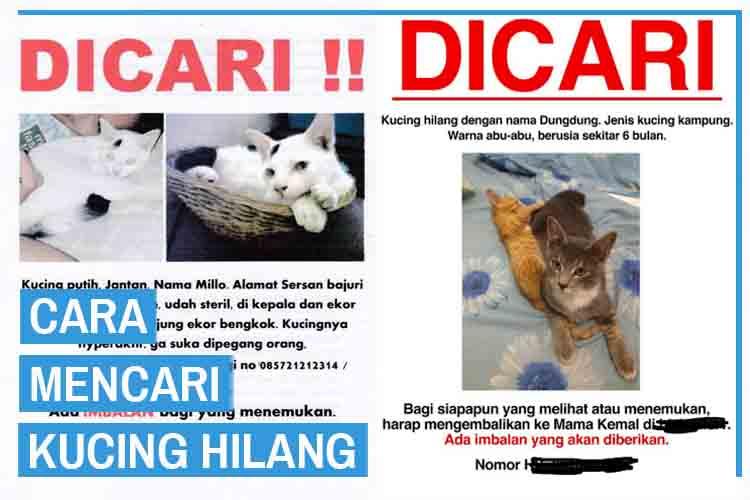 10 Cara Mencari Kucing Hilang Atau Kabur