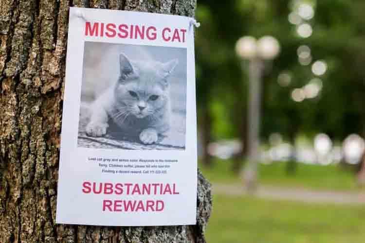 cara menemukan kucing hilang