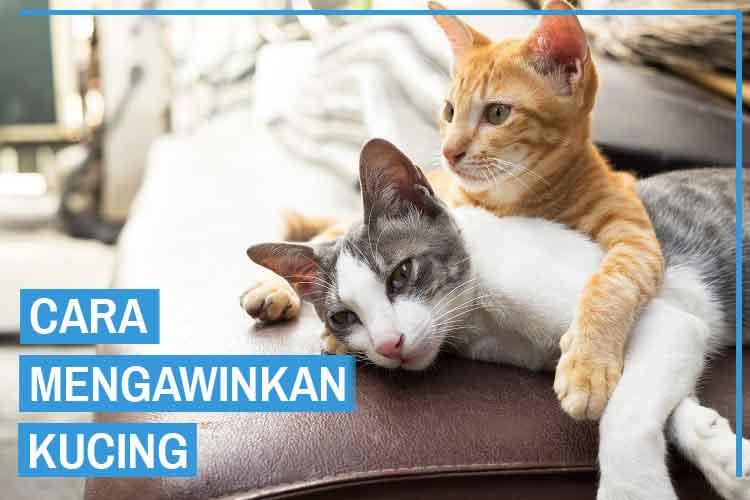 kucing kawin archives kucingklik com