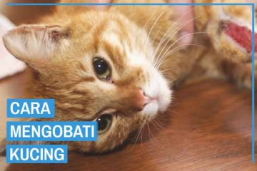 cara mengobati luka kucing