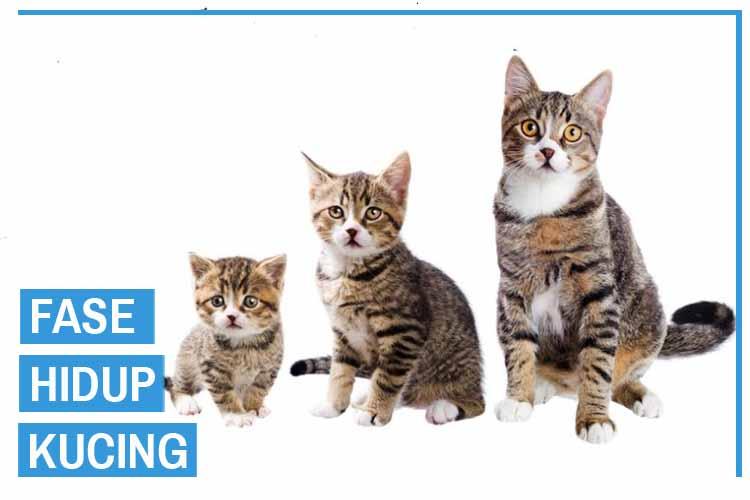 6 Fase Hidup Kucing Dari Lahir Sampai Mati