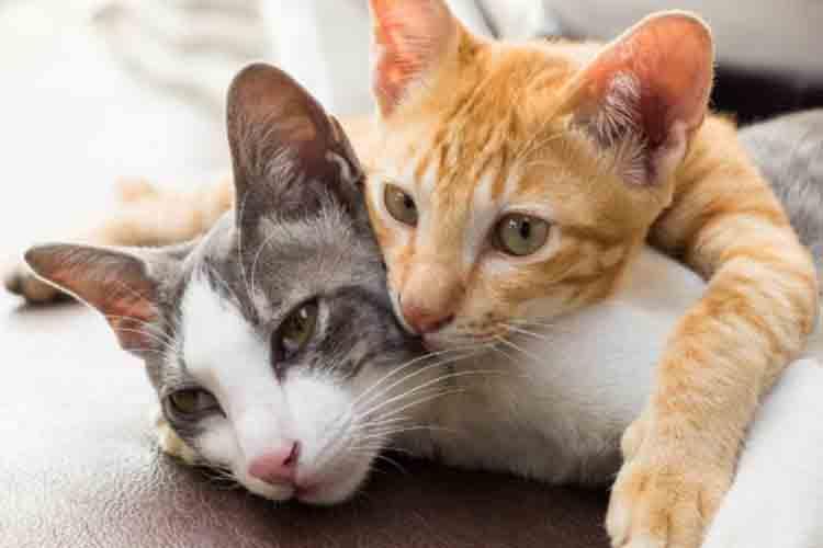 agar kucing betah di rumah