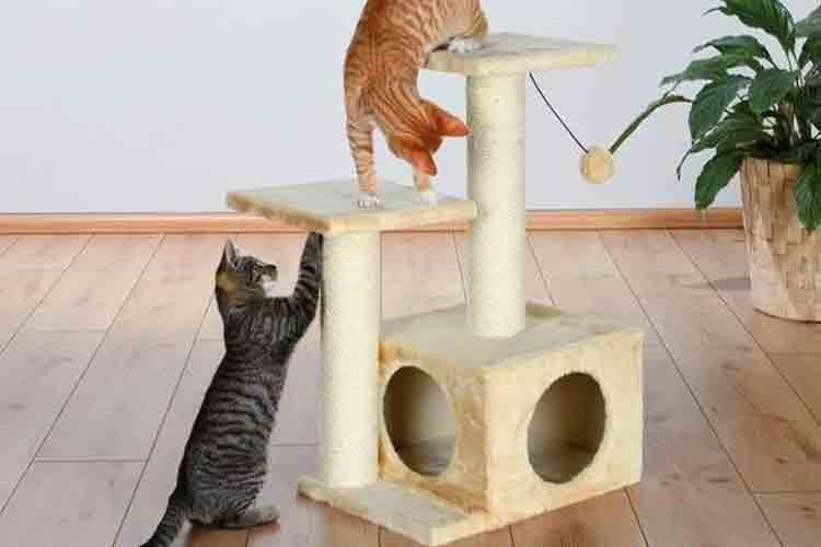 supaya kucing betah di ruangan