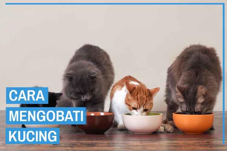 11 Tips Memberi Makan Kucing yang Baik