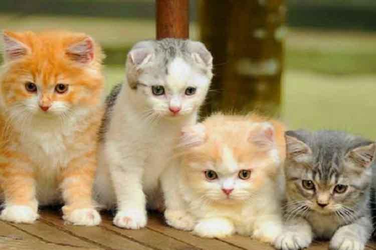 Ilustrasi Warna Bulu Kucing