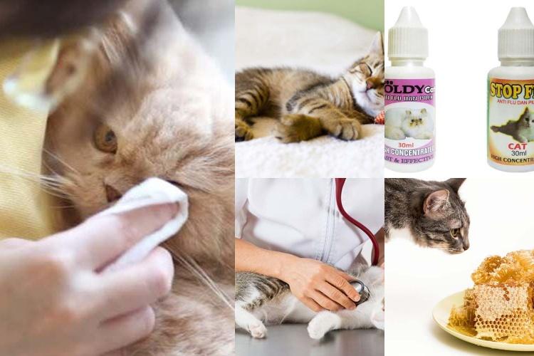 9 Cara Mengobati Kucing Flu Dari Para Ahli