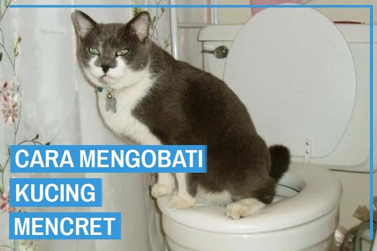 8 Cara Mengobati Kucing Mencret Dari Para Ahli