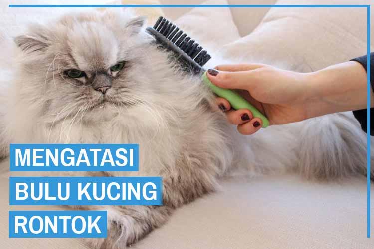 10 Cara Mengatasi Bulu Kucing Rontok
