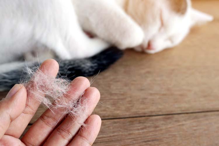Fase ganti bulu kucing secara alami