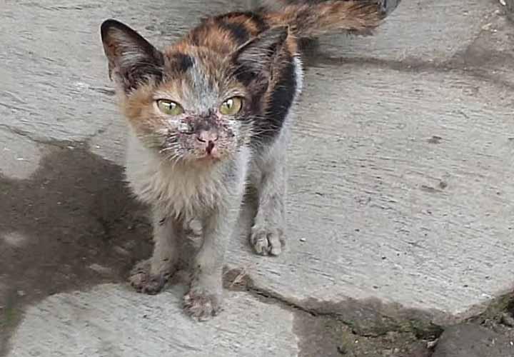 Lingkungan Kucing Kotor