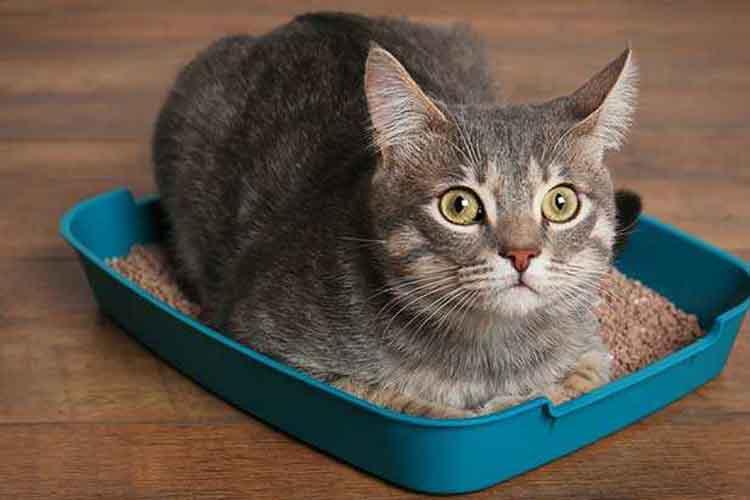 Kucing Diare Karena Cacingan