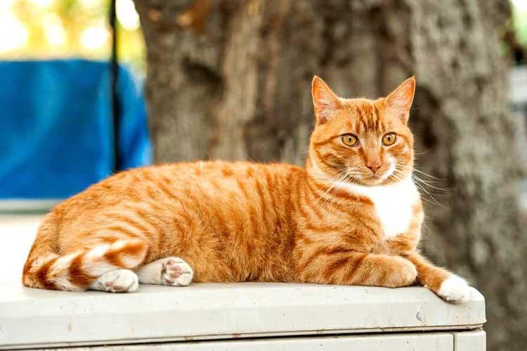 Berpuasa Untuk Mengobati Kucing Mencret