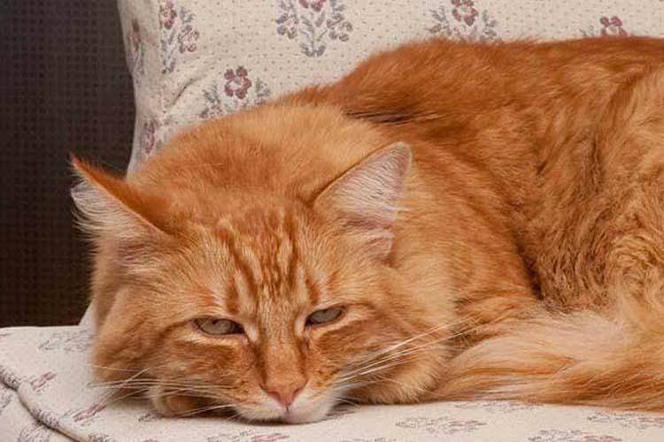 Kucing Stres