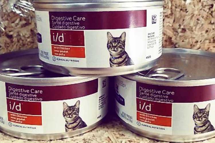 Makanan Kucing Khusus Diare