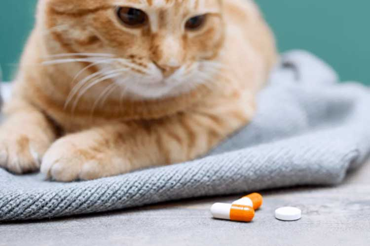 Memberikan Kucing Mencret Multivitamin