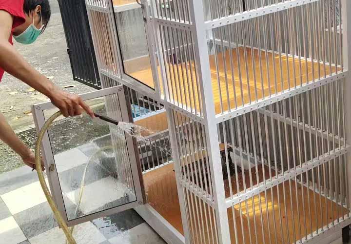 Membersihkan Kandang Kucing Scabies