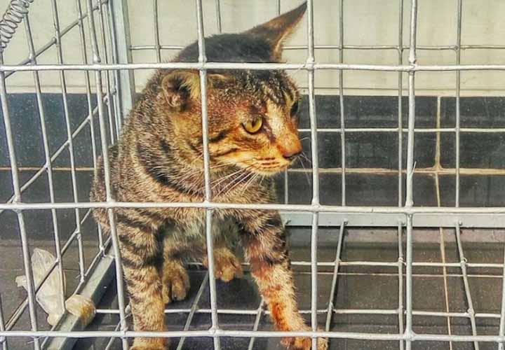Memisahkan Kucing Dalam Kandang