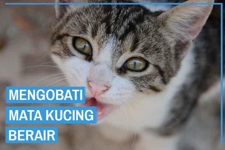 7 Cara Mengobati dan Mengatasi Mata Kucing Berair
