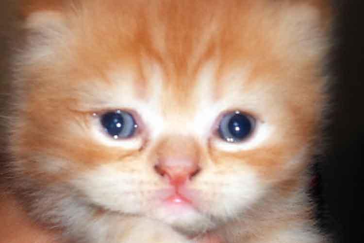 Mata Kucing Berair dari lahir