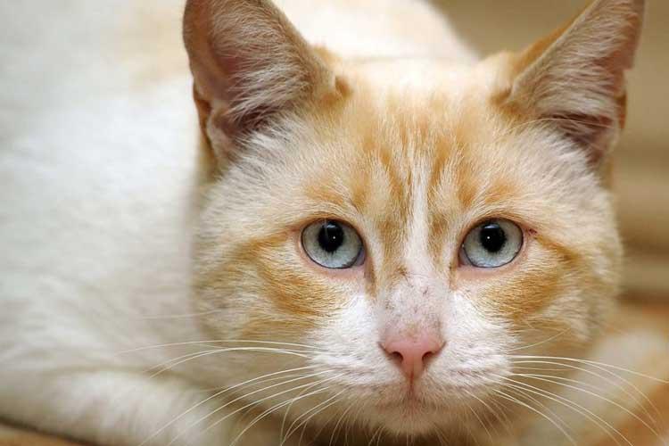 Sayangi Kucing Diare