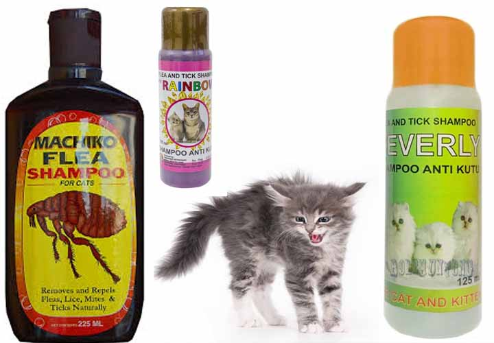 Shampoo Scabies Kucing