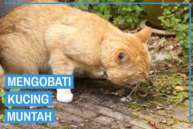 5 Cara Mengobati Kucing Muntah Yang Tepat