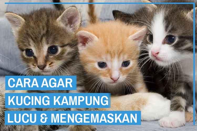Agar Kucing Kampung Lucu, Begini Cara Melatihnya