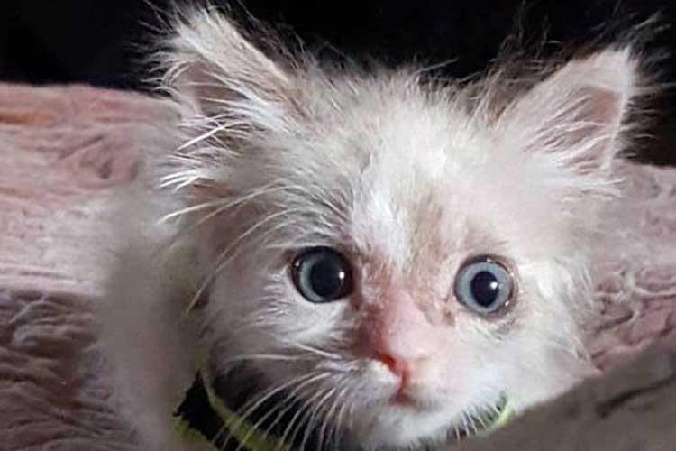 Mencegah Parasit Kucing