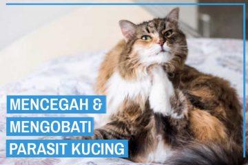 Mencegah dan Mengobati Parasit Kucing