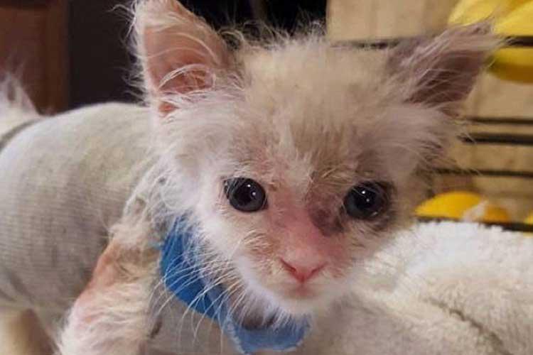 Cara Mencegah Dan Mengobati Parasit Pada Kucing ...