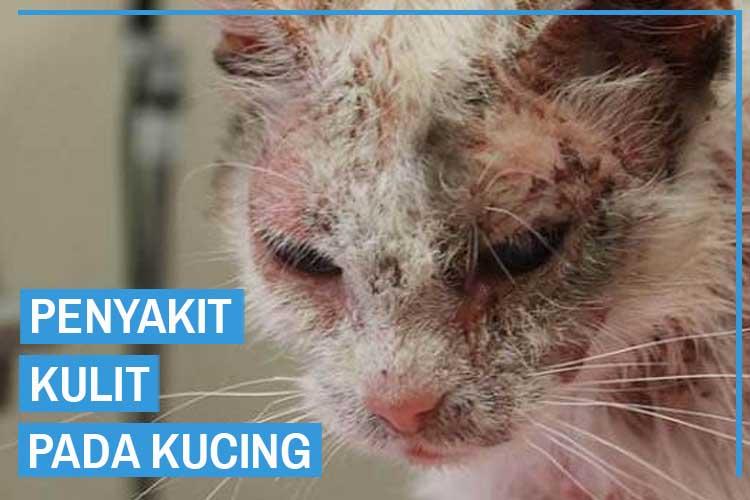 12 Penyakit Kulit Pada Kucing dan Solusi Mengatasinya
