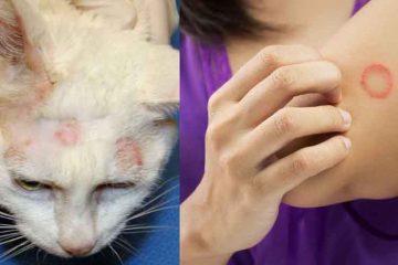 Infeksi Jamur Kucing Ke Manusia