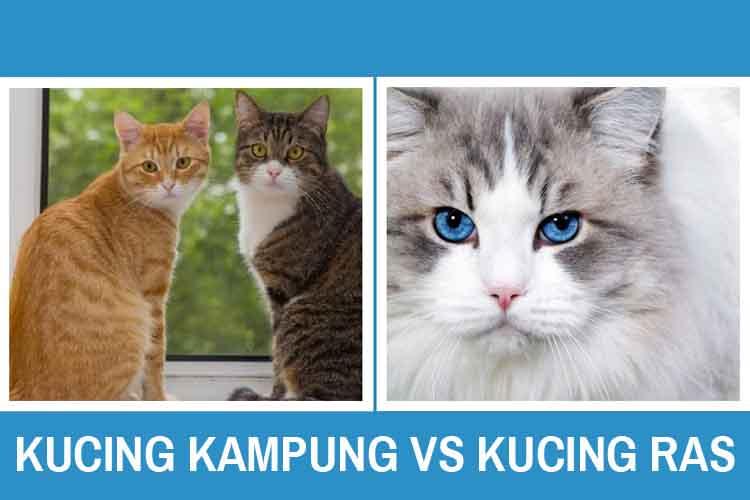 Kucing Kampung VS Kucing Ras, Bagus Mana?