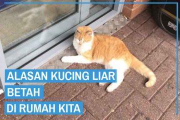 Alasan Kucing Liar Betah Di Rumah Kita
