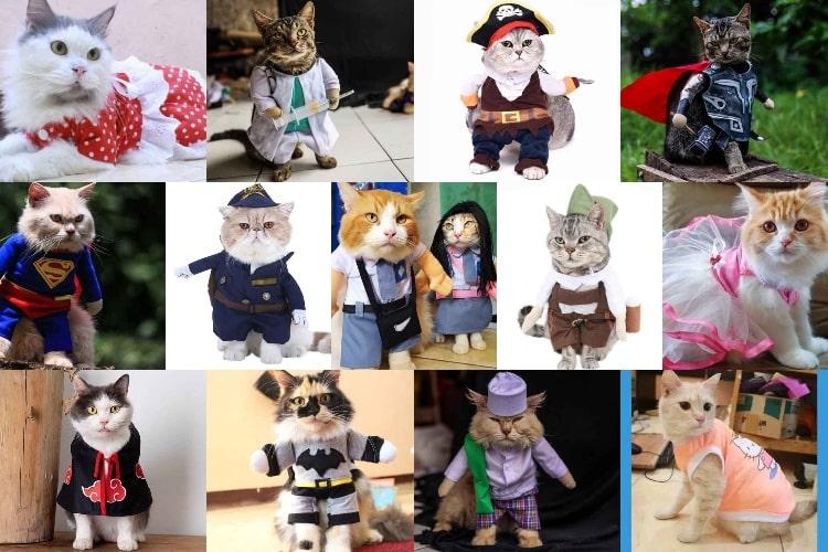 Contoh Baju Kucing Lucu Trendi & Kekinian